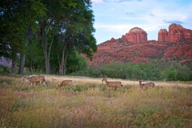 Hunting in Coconino National Forest