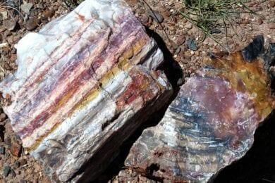 Petrified Forest Arizona